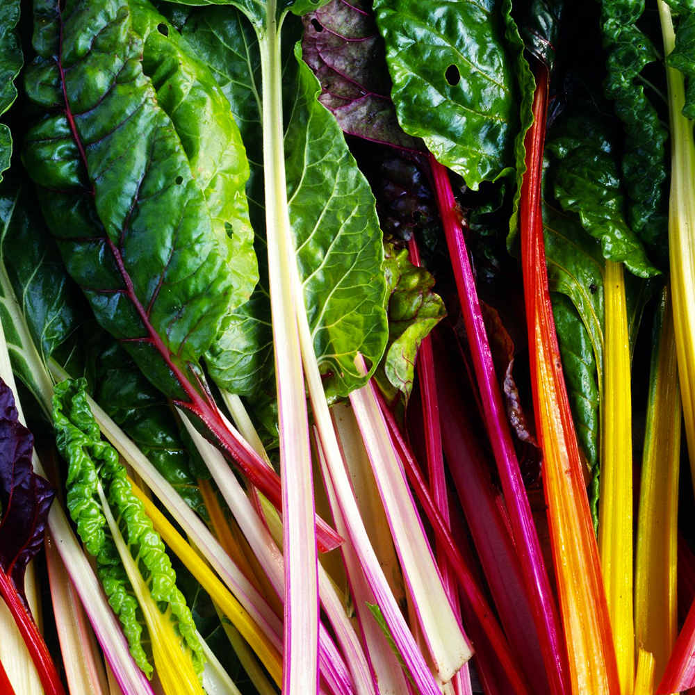 Rainbow Swiss Chard Green Thumb Growers Tt